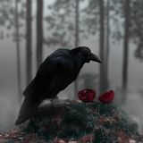 Raven In A Misty Forest With A Bloody Red Pomegranate. A fictional scene with a raven in a misty forest over a split bloody red pomegranate royalty free stock image