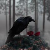 Raven In Misty Forest With uma romã vermelha ensanguentado imagem de stock royalty free
