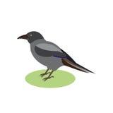 Raven nero, un uccello magico, illustrazione di vettore Immagine Stock