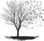 Raven op een esdoornboom royalty-vrije stock afbeelding