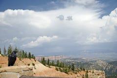Raven Overlooking Canyon Stock Photography