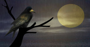 Raven in the rain Royalty Free Stock Images