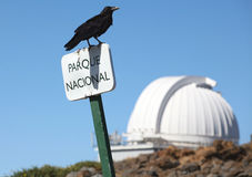 Raven in Roque de los muchachos Royalty Free Stock Image