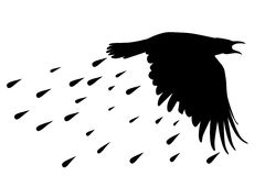 Raven's silhouette with rained drops. Raven's fly silhouette with rained drops on white Royalty Free Stock Photo