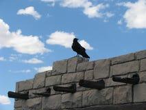 Raven si è appollaiato su costruzione di pietra Immagini Stock