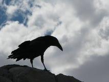Raven si è appollaiato sulla pietra Immagini Stock