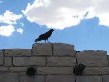 Raven si è appollaiato sulla pietra Immagine Stock Libera da Diritti