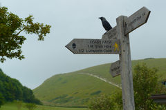 Raven on a signpost Royalty Free Stock Images