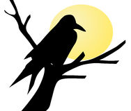 Raven silhouette Royalty Free Stock Photography