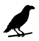 Raven silhouette Stock Image