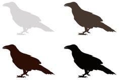 Raven silhouette Royalty Free Stock Photos