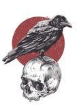 Raven On Skull Photographie stock libre de droits