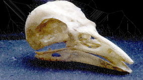 Raven skull Royalty Free Stock Photo