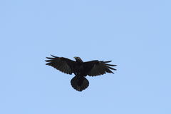 Raven on the sky Royalty Free Stock Photos