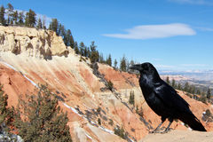Raven in southern Utah Stock Photos