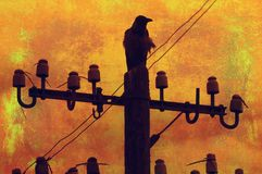 Raven standing on the telephone pole Royalty Free Stock Photos