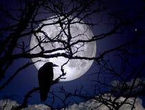 Raven sur des branches dans une nuit ?clair?e par la lune photos stock
