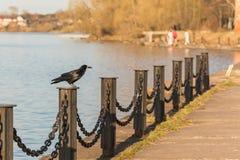 Raven sur la barrière sur le remblai de la Volga image libre de droits