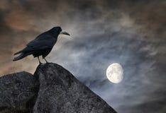 Raven sur une pierre Images libres de droits