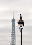 A raven on top of street light in Paris Stock Photography
