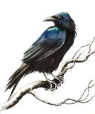 Raven on a tree Royalty Free Stock Images