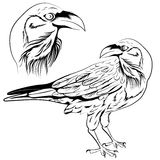 Raven vector. Black and white raven, a set of two objects a head and a bird. Vector illustration Royalty Free Stock Images
