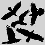 Raven. Vector image. With Ai file Stock Images