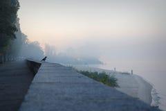 Raven watching the fishermen. Raven watching the early foggy morning fishermen Royalty Free Stock Image