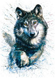 Wolf. Watercolor painting, animals, predator Royalty Free Stock Photos
