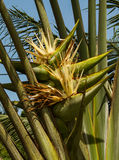 Ravenala madagascariensis Stock Photos