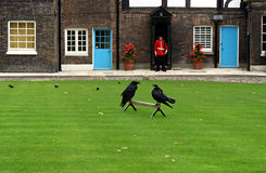 Ravens à la tour de Londres (Angleterre) Photos libres de droits