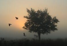 ravens Royaltyfri Foto