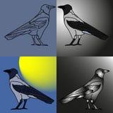 ravens Stockfotografie