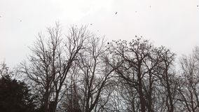 Ravens. Enjoying the cold weather Stock Images