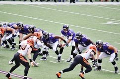 Ravens Football Royalty Free Stock Image