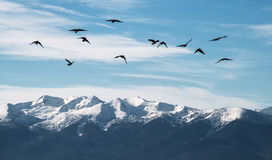 Ravens Over a Mountain Ridge Stock Photography