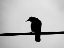 A Ravens Silhouette Stock Image