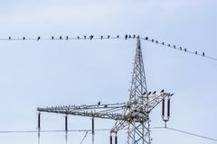 Ravens are sitting on a power line stock photo