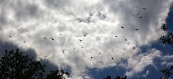 Ravens in the sky autumn grey gloomy mood Royalty Free Stock Images