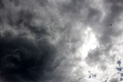 Ravens in the sky autumn grey gloomy mood Stock Photography