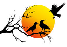 Ravens on tree branch, vector Royalty Free Stock Photography