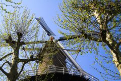 RAVENSTEIN, NETHERLANDS - APRIL 21. 2019: View on sails of ancient windmill through branches of a tree against cloudless blue sky royalty free stock image