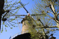 RAVENSTEIN, NETHERLANDS - APRIL 21. 2019: View on sails of ancient windmill through branches of a tree against cloudless blue sky royalty free stock photos