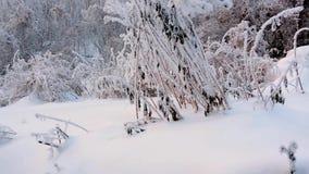 Ravijn in de winter met vorst-behandelde installaties stock videobeelden