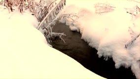 Ravijn in de winter met vorst-behandelde installaties stock footage