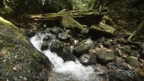Ravijn stromende beek stock footage