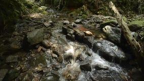 Ravijn stromende dunne beek stock footage