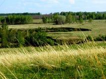 Ravin av skog-stäppar Arkivbilder