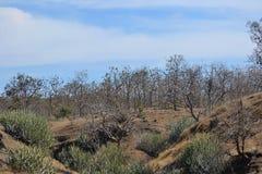 Ravin, cactus, nuages et bois Photo libre de droits