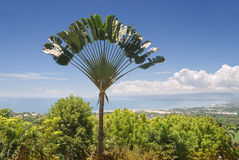 Ravinala palm over tropical bay. Panorama over a tropical bay and city with an exotic ravinala (traveler's) palm (Ravenala madagascariensis) tree silhouette in Royalty Free Stock Images